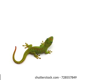 Madagascar day gecko isolated on white background