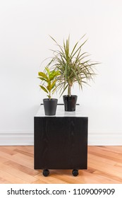 Madagascar dragon tree and Gold Dust Croton plant in black pots, on a side table with wheels.