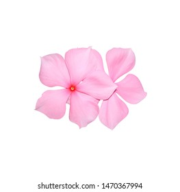 Madagascar periwinkle, Vinca,Old maid, Cayenne jasmine, Rose periwinkle, Catharanthus roseus, Small couple flowers isolated on white background. with clipping path