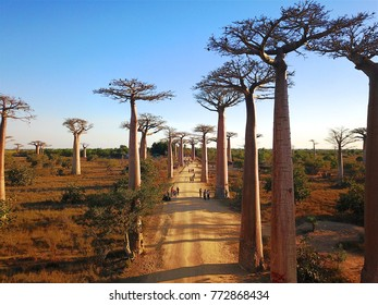 Madagascar's Baobabs,Aerial views,Morondava Region,Baobabs Beautiful view