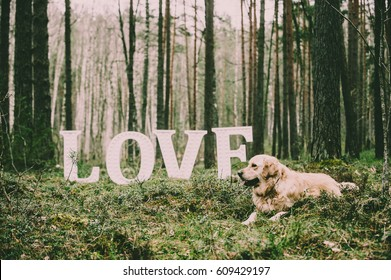 "Made of wooden letters ""LOVE"" Artwork - DOG Love"