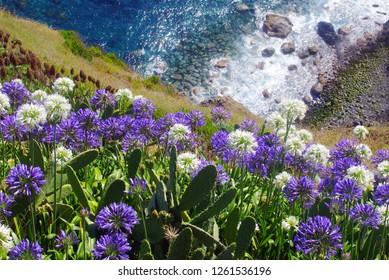 Madeira island coast.