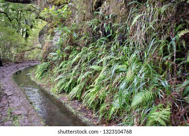 Madeira island Portugal Levada water channel