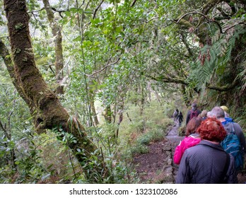 Madeira island Portugal - people doing Ribeiro Frio levada walks