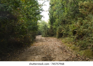 Madeira, Portugal - September 2017: Typical rough terrain on a forest track used for off road tours