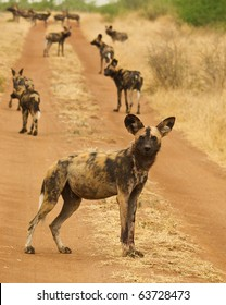 The Madikwe Pack
