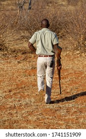 Madikwe, South Africa - 5th September 2014: An African Game Ranger walking ahead of a Vehicle checking for Wildlife tracks on a Game Reserve.