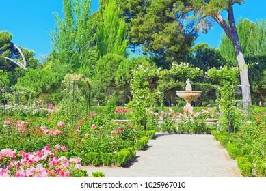 Madrid, Spain- June 05, 2018 : Walking through Buen Retiro Park. Rose Park(Parque De Las Rosas) in Botanical Garden in Park of Retiro. Madrid, Spain.