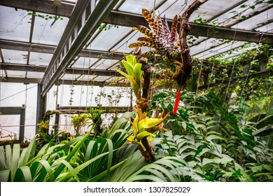 MADRID, SPAIN - June 2018: Orchids collection in green house of Royal Botanical Garden in Madrid (Real Jardin Botanico), Spain