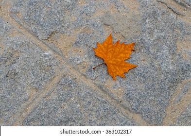 MADRID/SPAIN - OCTOBER 13 2012: Dry leaf on the ground, Madrid/Spain.