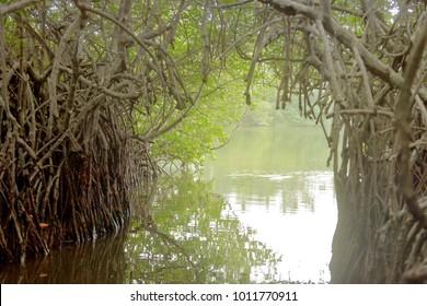 Maduganga Lake, Balapitiya, Sri Lanka - On a boat safari through a mangrove tunnel