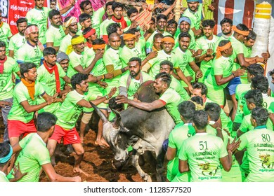 MADURAI PALAMADU,INDIA- January 15, 2018 : Competitors taking part in the bull taming sport of jallikattu on  January 15, 2018 in AVANYABURAM ,Tamil Nadu, India.Union Government grant permission 2017