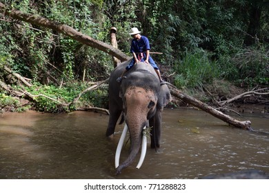 MAE SA, THAILAND - NOVEMBER 27: Elephant bath on 27 November 2017 at Mae Sa. Mae Sa is an elephant camp, where elephants are trained and treated well by the local people..