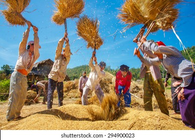 MAEHONGSON, THAILAND - NOV 11: Rice threshing on November 11, 2008 in Maehongson, Thailand. Hand-threshing is still practiced in many parts of Thailand