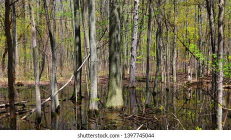 Magee marsh in Ohio wild life refuge