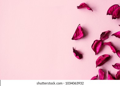 Magenta dry flowers on pink background, with copy space; floral background