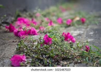 magenta paper flower
