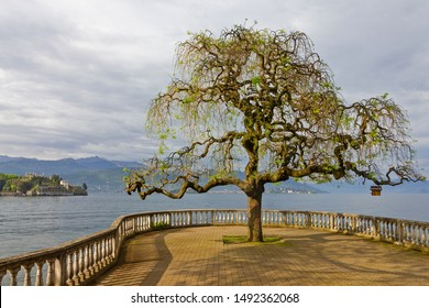 Maggiore lake view on Isola Bella, Stresa, Italy, Lombardy