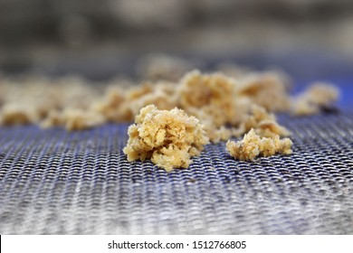 Maggot eggs that will hatch and many living larvae for fishing