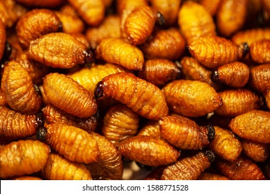 Maggots Background, fish bait, feed, for fishing, fried insects in Thailand