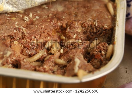 Maggots Close Opened Box Cat Food Stock Photo Edit Now 1242250690
