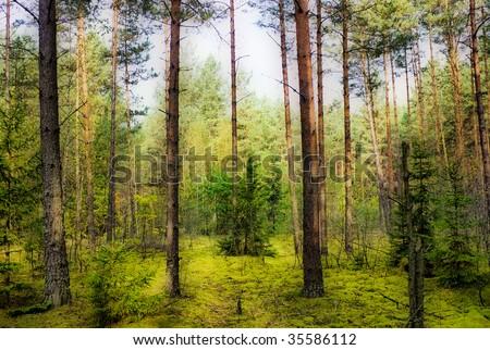 Magic Under Orton Park Oak >> Magic Autumn Pinewood Orton Effect Stock Photo Edit Now 35586112