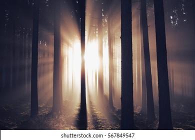 Magic autumn sunrise.
