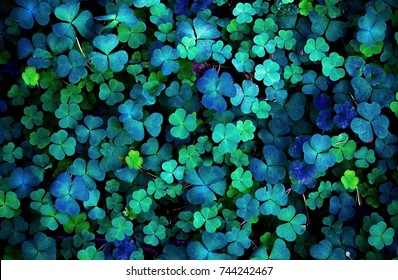 magic clover in a dark forest
