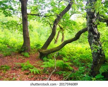 Magic corner in Green forest