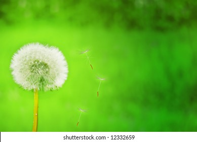 Magic Dandelion Green