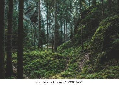 Magic dark forest. Autumn forest scenery with rays of light. Mistic forest. In the background are mountains