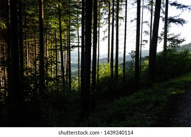 Magic dark forest. Autumn forest scenery with rays of warm light. Mistic forest.
