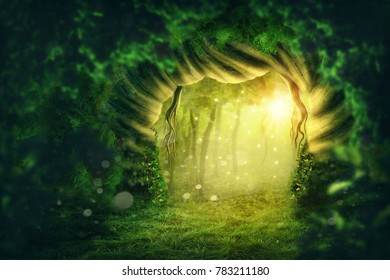 Magic dark forest with sunshine