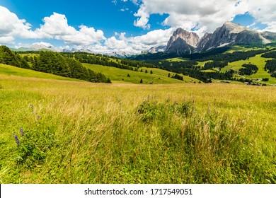 Magic of the Dolomites in summer. Alpe di Siusi. UNESCO. Italy.