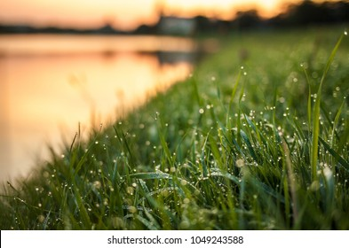 Magic drops in the grass in the morning in Cracow, Poland