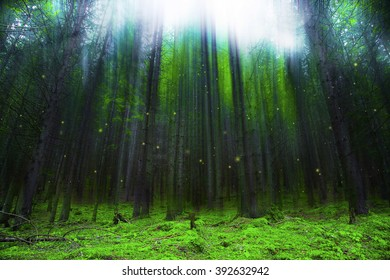 Magic fantasy forest with lights, fairytale forest scene