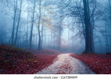 Magic foggy light in colorful autumn forest with road.