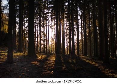 magic forest in the Czech Republic , morning sun, sunrise
