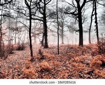 magic forest in enchanted fog