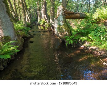 Magic forest water stream, creek with stones, moss, ferns, leaves and trees in Luzicke hory Lusatian Mountains, Czech Republic. Summer sunny day, golden light - Shutterstock ID 1918895543