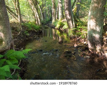 Magic forest water stream, creek with stones, moss, ferns, leaves and trees in Luzicke hory Lusatian Mountains, Czech Republic. Summer sunny day, golden light - Shutterstock ID 1918978760