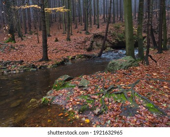 Magic forest water stream, creek in autumn with moss, ferns, stones, orange fallen leaves and trees in Luzicke hory Lusatian Mountains, Czech Republic. Moody fall day - Shutterstock ID 1921632965