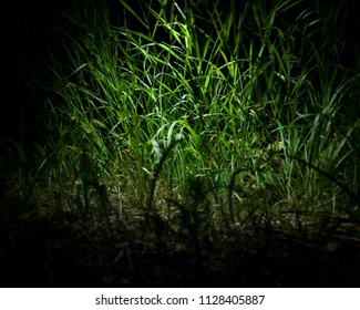 Magic grass in the night garden