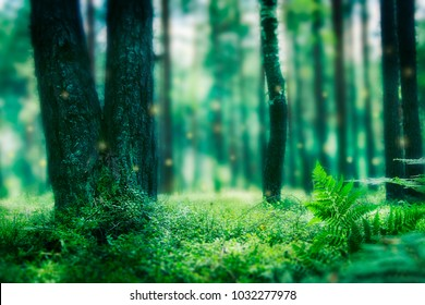 magic green forest with magic lights