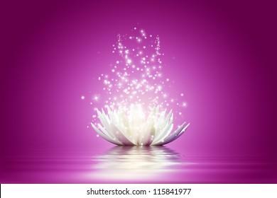 Magic Lotus flower