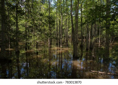 Magic of Louisiana swamps