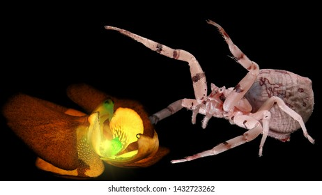 Magic luminous blooming orchid flower and the spider that guards him. Inspiration fantasy image on a black background