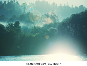 Magic mist in the forest