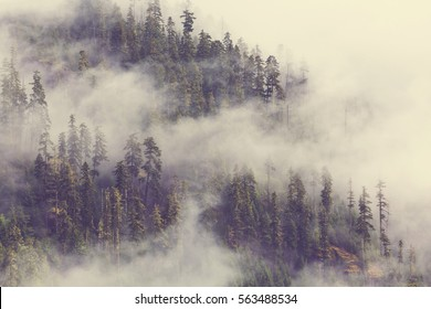 Magic misty forest in the morning