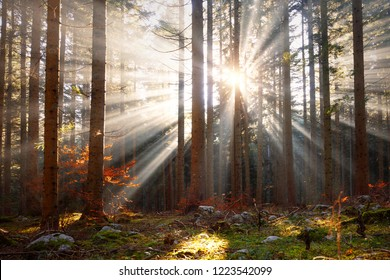 Magic morning sun rays through trees in the forest landscape.